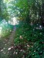 Entre l'Allée du bois du Cerf et la D34