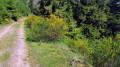 Le Jardin des Fées, le Portique de Pierre, le Rocher de Mutzig