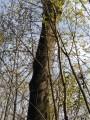 (1) Un arbre remarquable à identifier.
