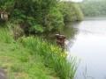 Les eaux dormantes de Marcilly-en-Gault