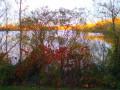 Les rives de la Thur et sa forêt au pays de la potasse