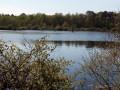 À la découverte des bois et des étangs de Loudon
