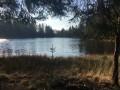 Boucle dans la Forêt Domaniale du domaine de Sèdiéres