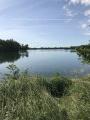 Les étangs de Montrevel-en-Bresse