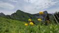 fleurs sur le plateau