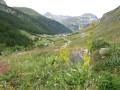 Flore d'alpage aux Gorettes
