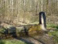 Sur la trace des tranchées de 14/18 dans le Bois de Champenoux