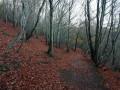 Forêt au Col de Ceyssat