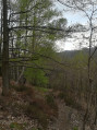 Forêt au point 11