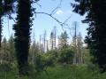 Forêt bien abîmée