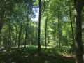 Forêt Chemin de l'Eventail