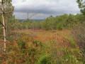 Forêt Communale d'Argol