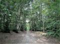 forêt  d'eperlecques