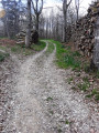 Forêt de Berdoeus