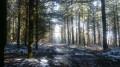 Forêt de Blessac