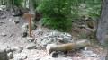 Forêt de Boscodon