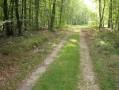 En forêt de Brotonne du Grand Maître à la Haye-de-Routot
