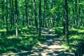 En route pour la forêt de Buzet