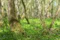 Le Bois de Chassagne
