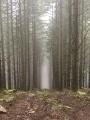 Forêt de Chauzeix