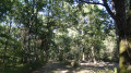 Ici, forêt de chênes