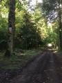 Forêt de Cinglais