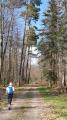 Forêt de Eichwald - large chemin