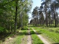 Forêt de feuillus et pins sylvestres