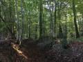 Forêt de la Charnie
