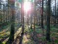 Forêt de la route forestière des Barres