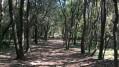 Forêt de la Valmasque