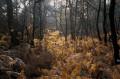Forêt de Leppo