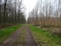 Forêt de Mormal