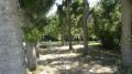 Forêt de peupliers au bord du Beuvron