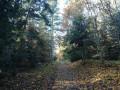 Forêt de Redon