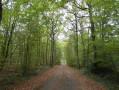 Forêt de Rosny-sur-Seine