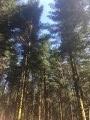 Forêt de Saint-Julien-aux-Bois.