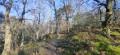 Forêt de Samoreau