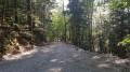 forêt de Saou
