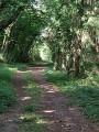 Boucle en Forêt de Saint-Sauvant par la Branlerie