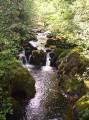 La Forêt de Trémouille