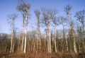 Forêt de Valdieu-Réno
