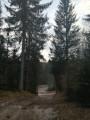 Forêt départ du circuit