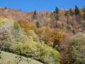 Forêt des Bauges