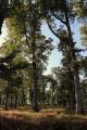 Forêt domaniale de Bommiers