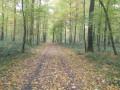 Forêt domaniale de Fourmies