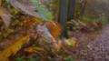Boucle en Forêt de Montmorency