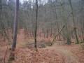 Circuit de Zittersheim à Wingen-sur-Moder par la forêt