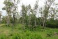 Forêt expérimentale