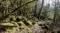 Forêt moussue